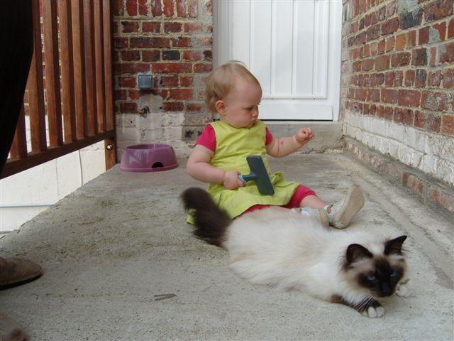 Au jardin des hesp rides sacr de birmanie entretien - Empecher les chats de venir dans le jardin ...
